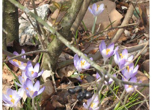 spring-flowers-09